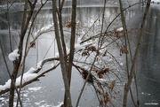 19th Dec 2020 - Winter wonderland 4