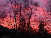 10th Dec 2020 - Red Sky Evening