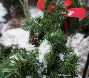17th Dec 2020 - Skiff of Snow