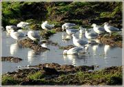 20th Dec 2020 - gulls