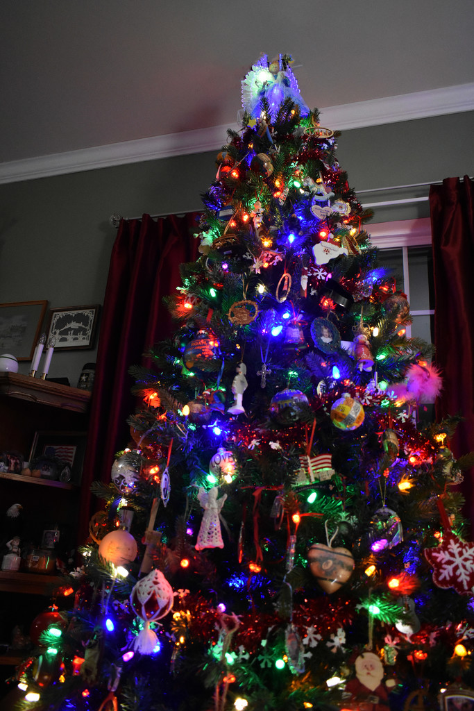 The tree is looking up! by homeschoolmom