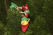 20th Dec 2020 - Christmas has gone Pear-Shaped!