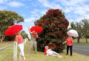 20th Dec 2020 - Merry Christmas from the brolly girls
