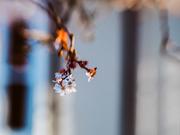 19th Dec 2020 - bloom of hope