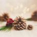 On December 20 by lyndemc