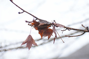 20th Dec 2020 - Fall isn't over yet!