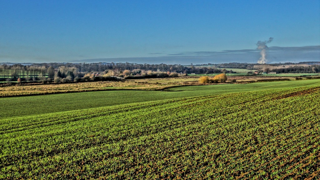 CHESHIRE PLAIN by markp