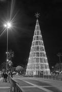 21st Dec 2020 - Christmas Tree