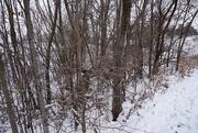 21st Dec 2020 - Winter wonderland 3