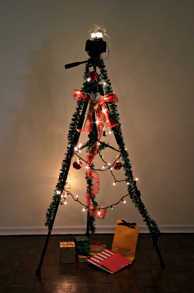 oh, Christmas tree!  by summerfield