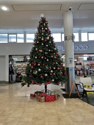 12th Dec 2020 - Oh Christmas Tree, Oh Christmas Tree! 🎵🎶