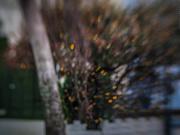 22nd Dec 2020 - bokeh burst