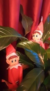 22nd Dec 2020 - Two Christmas Elves