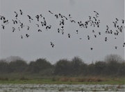 21st Dec 2020 - More rain... more lapwings