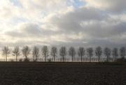 22nd Dec 2020 - Bare trees, bare soil