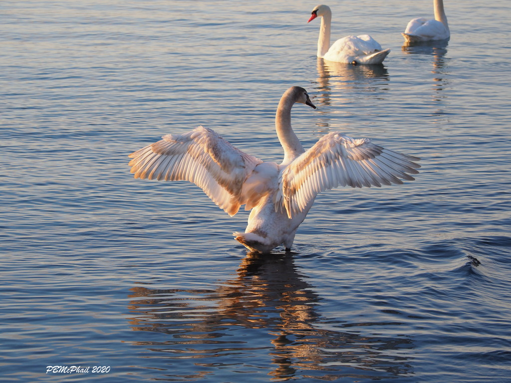 Stretching My Wings by selkie