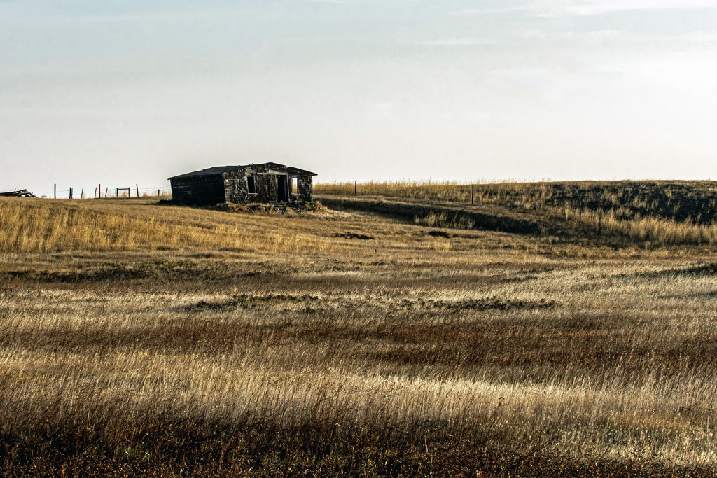 Prairie Dreams by farmreporter