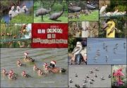 23rd Dec 2020 - 12 birds of Christmas