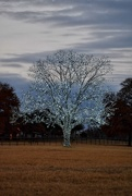 23rd Dec 2020 - The Bartonville Tree at sunset