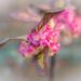 Pink berries by haskar