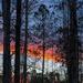 Sunrise on the Pines by kvphoto