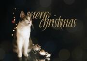 24th Dec 2020 - 2020-12-24 Frohe Weihnachten / Joyeux Noël / Merry Christmas / Buon Natale / Feliz Navidad / Bunas festas da Nadal