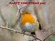 25th Dec 2020 - Happy Christmas!