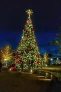 24th Dec 2020 - Oh Christmas tree!