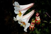 25th Dec 2020 - Christmas lilies as a Christmas tree!