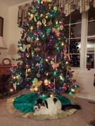 24th Dec 2020 - Merry Christmas!