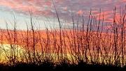 25th Dec 2020 - Christmas sunrise