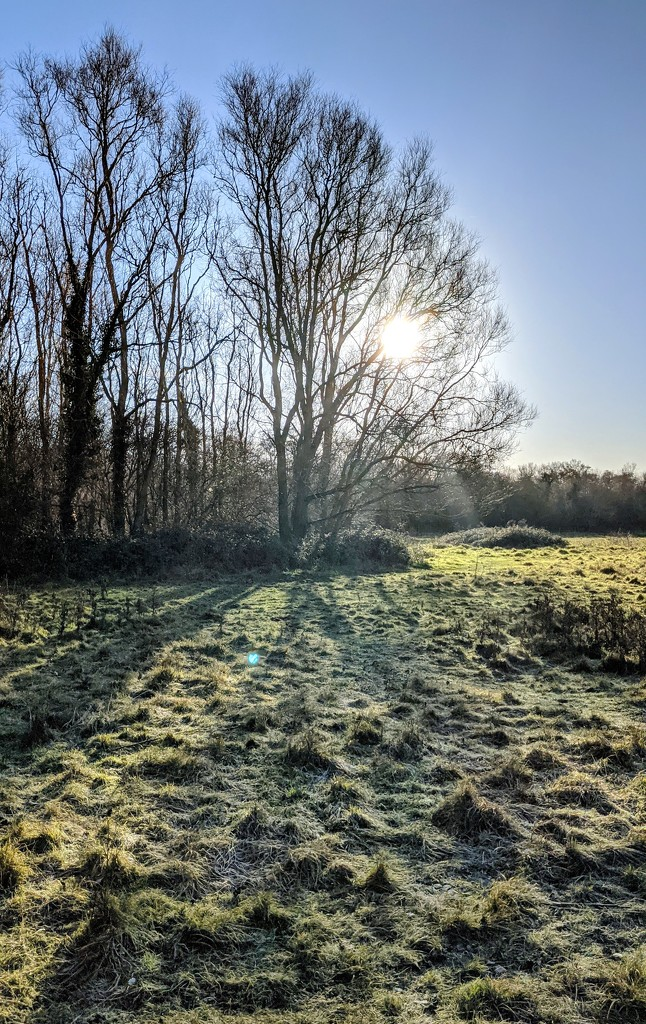 Crisp Christmas Day Morning by stevehurst