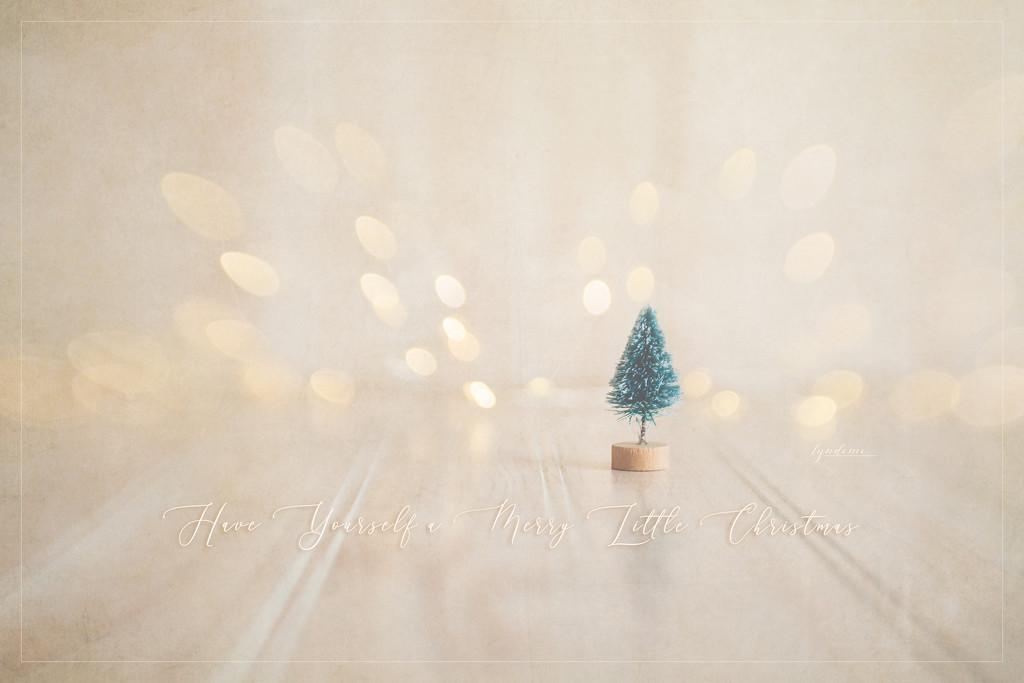 On December 25 by lyndemc