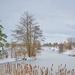 Winter Pond View by gardencat