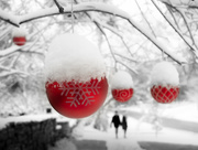 25th Dec 2020 - walking in a winter wonderland...