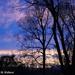 Backyard Sunset by falcon11