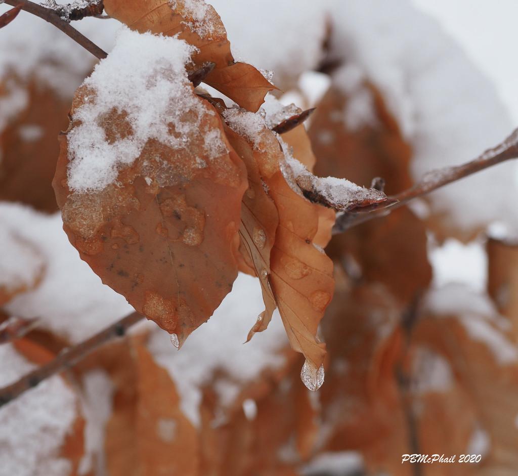 Frozen Drop by selkie