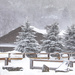 It is a white Christmas   by dutchothotmailcom