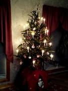 25th Dec 2020 - Oh Christmas tree Oh Christmas tree