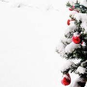 26th Dec 2020 - Fresh Snow