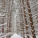 Winter Wonderland by fayefaye
