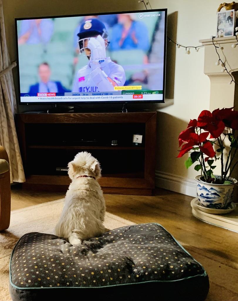 George loves cricket by pamknowler