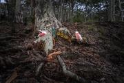 27th Dec 2020 - Coastal fairy land