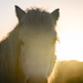 High Corner Horse