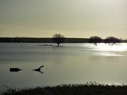 26th Dec 2020 - More floods