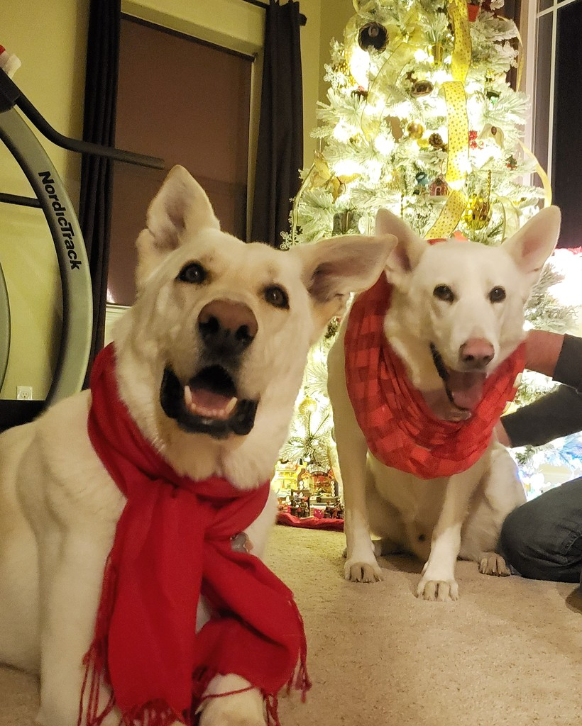 We woof you a hairy Christmas! by carrieoakey
