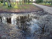 28th Dec 2020 - reflections in a puddle