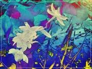27th Dec 2020 - Flowers Botanical Gardens Encinitas California USA