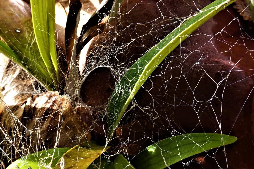 Spider Man Favourite by sandradavies