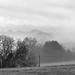 Misty morning b&w by francesc